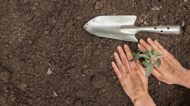 Human hand planting seedling into soil near hand shovel Free Photo