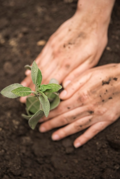 Human hand planting young plant into soil Free Photo