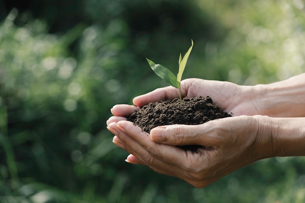 Human hands holding green small plant for life and ecology concept Premium Photo