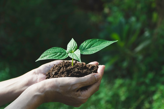 Human hands holding green small plant with copyspace . life and ecology . Premium Photo