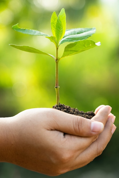 Human hands holding a young green plant. save the world and world environment day concept Premium Photo