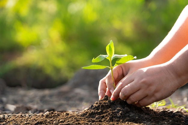 Human hands planting a young green tree. save the world ...