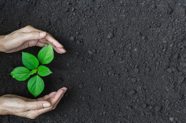 Human hands protecting green small plant for life and ecology concept. Premium Photo