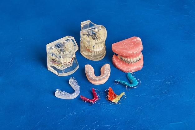 Модель челюсти или зубов человека с металлическими проволочными скобами, ортодонтический инструмент презентации, крупным планом Premium Фотографии