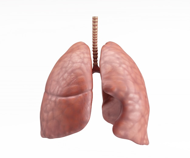 Human Lungs Design Photo Free Download