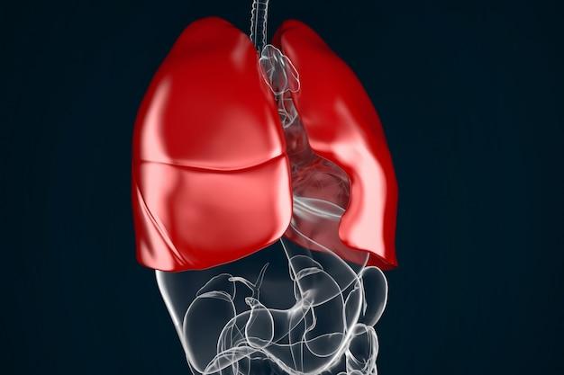 Human lungs Photo | Premium Download