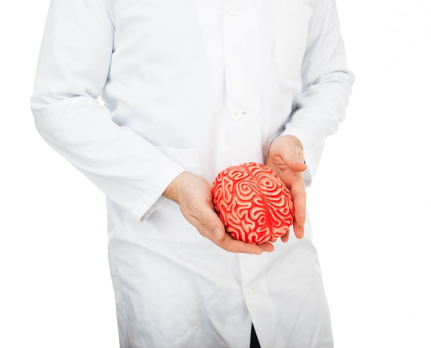 Human rubber brain between the hands Premium Photo