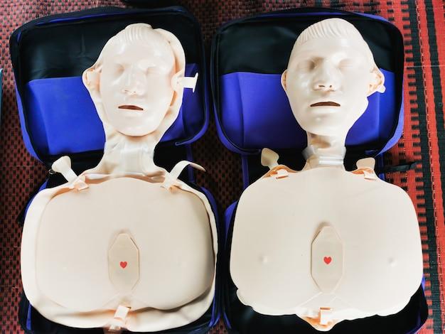 Модель из человеческого каучука для демонстрации работы сердечного насоса Premium Фотографии