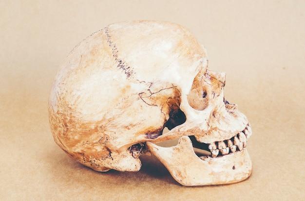 Human Skull Anatomy On Background Photo Premium Download