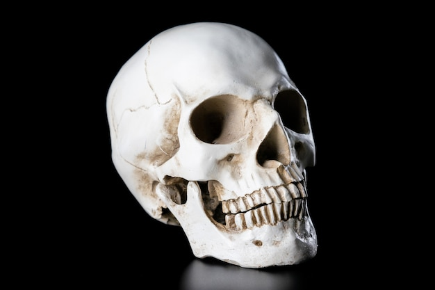 Human skull isolated on black background. halloween day concept. Premium Photo