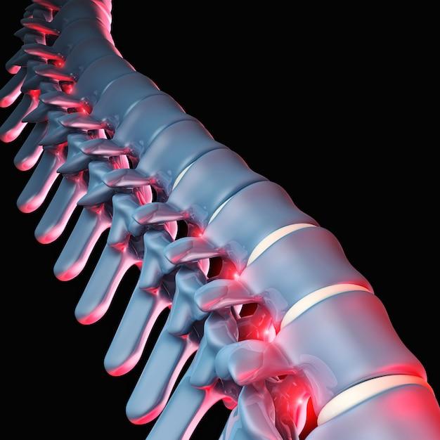 Human spinal bone 3d Premium Photo