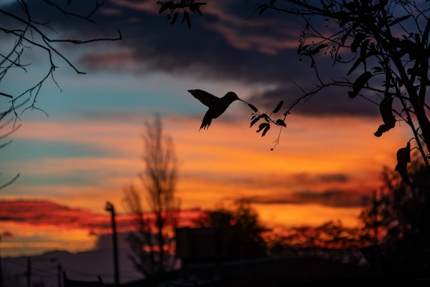 Hummingbird and a amazing sunset Premium Photo
