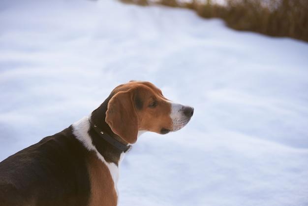 雪の上のハンター犬 無料写真