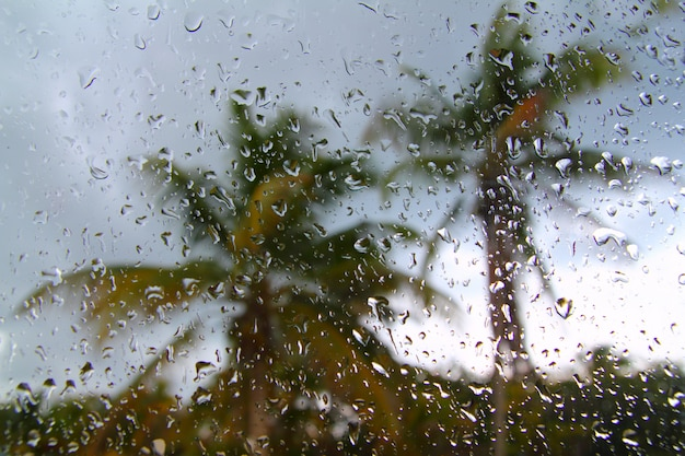 Hurricane tropical storm palm trees from inside car Premium Photo