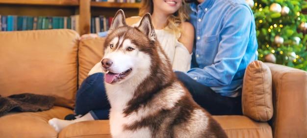 飼い主と一緒に自宅でハスキー犬の大人。 Premium写真