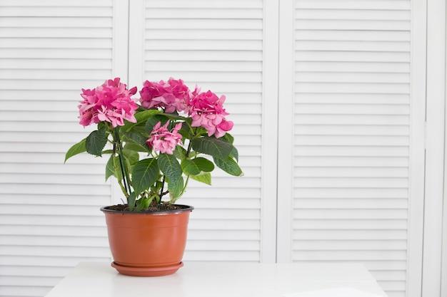 Цветок гортензии в вазе над белыми ставнями Бесплатные Фотографии