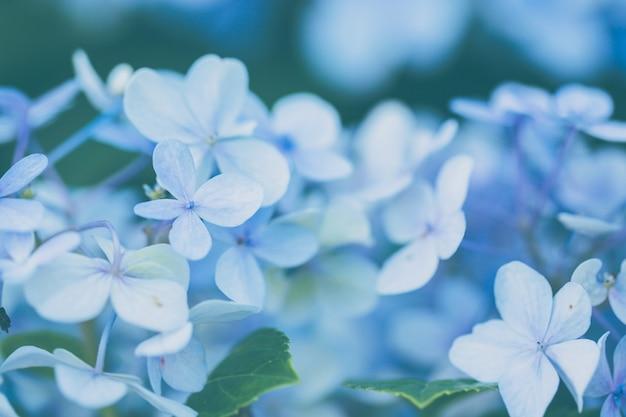 수국 꽃 프리미엄 사진