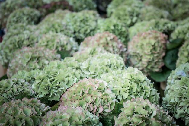 Hydrangea flowers Premium Photo
