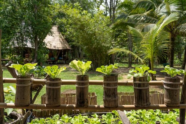 Hydroponic plantation make from nature Premium Photo