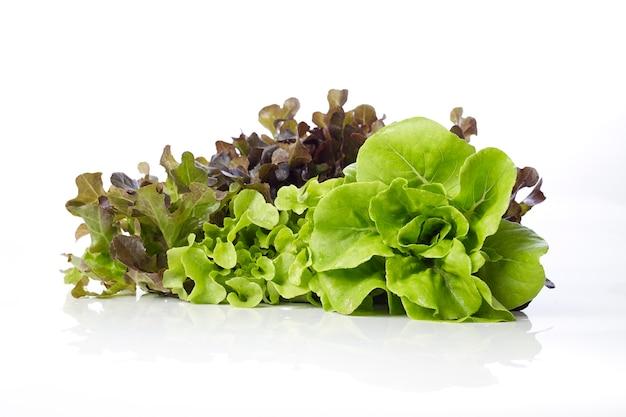 Hydroponic salad on white background Premium Photo