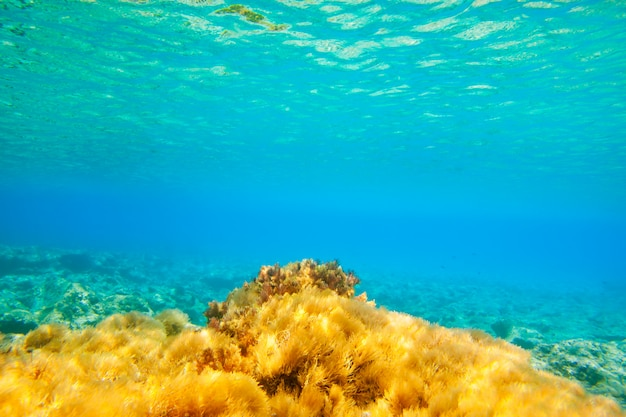 Ibiza formentera underwater anemone seascape Premium Photo
