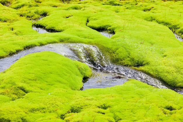 緑の苔でアイスランドの小さな川の流れ Premium写真