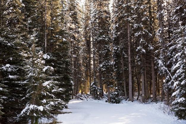 Strada ghiacciata tra filari di alberi innevati Foto Gratuite