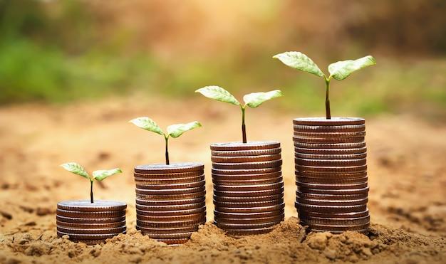 Idea plant with money growing on soil. Premium Photo