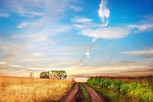 Idyllic rural landscape with road between two fields. Premium Photo