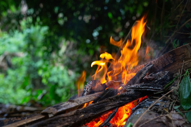 Igniting the fire in the forest for camping. Free Photo