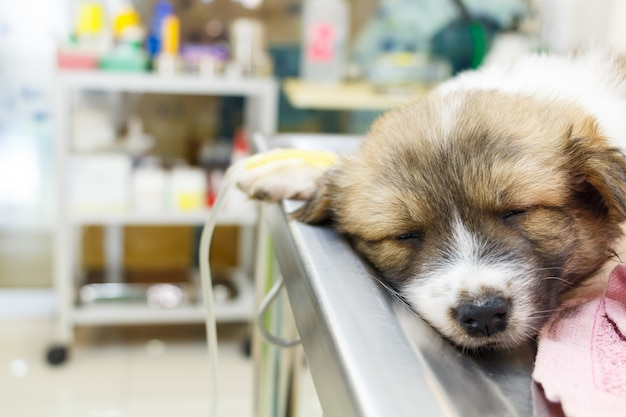 Ill puppy with intravenous drip on operating table Premium Photo