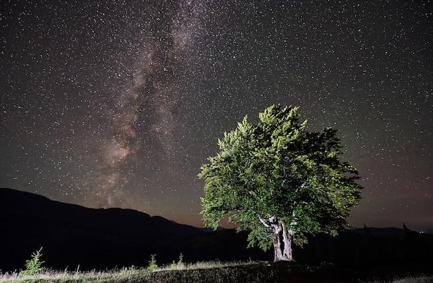 별과 은하수가 가득한 밤하늘 아래 외로운 외로운 나무 프리미엄 사진