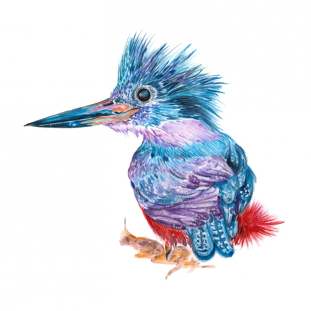 Illustration of a painted watercolor bird Premium Photo