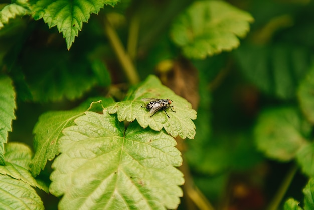 Image of a flies (diptera) on green leaves. insect. animal Premium Photo