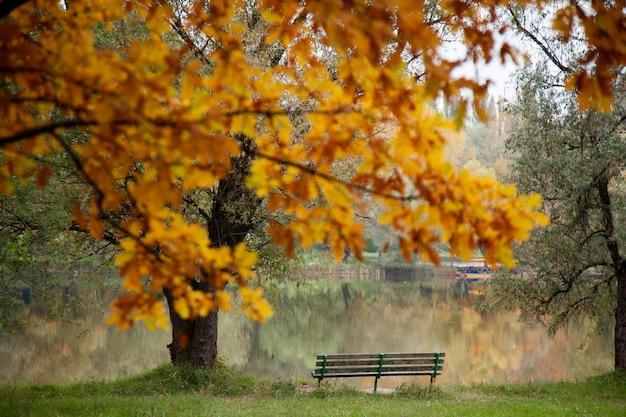 Изображение в парке с пустым местом в осенний день Premium Фотографии
