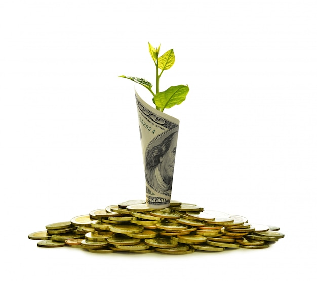 Image of pile of coins and rolled bank note with plant on top showing business Premium Photo