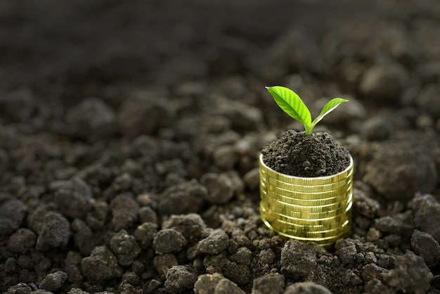 Image of pile of coins with plant on top for business Premium Photo