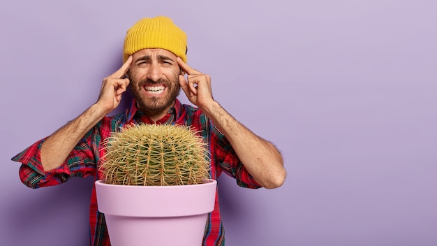 Image of upset man keeps both index fingers on temples, suffers from migraine, smirks face from pain, tries to concentrate, grows potted cactus, poses over purple background. Free Photo