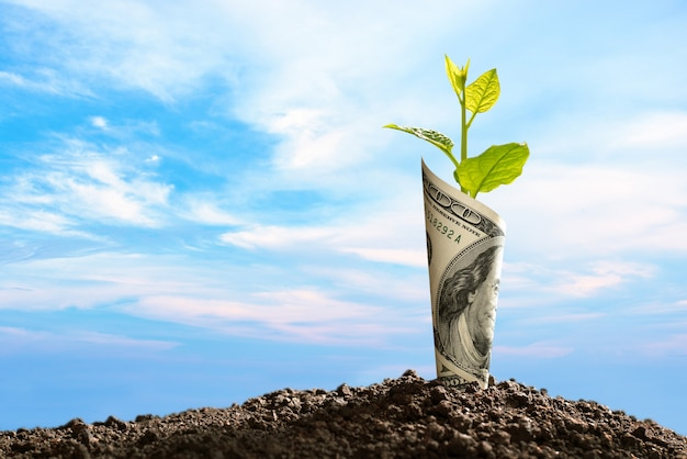 Image of us dollar bank note with plant growing on top for business Premium Photo