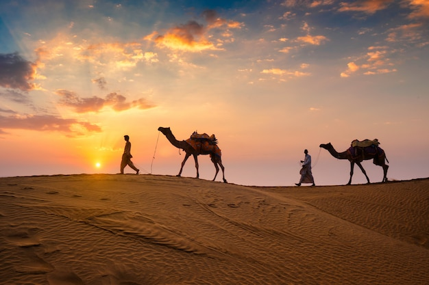 Indian cameleers bedouin with camel silhouettes in sand dunes of thar desert on sunset Premium Photo