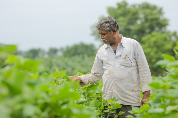 Indian farmer in cotton farm Premium Photo
