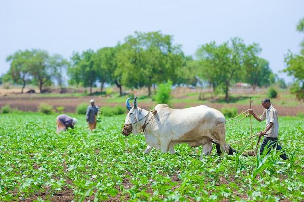 Indian farming technique Premium Photo