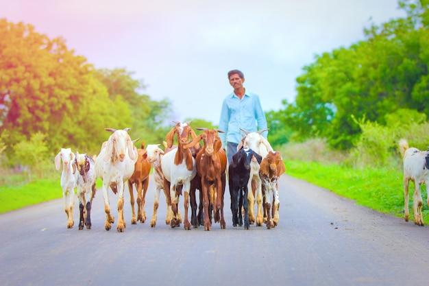 Indian goat at field Premium Photo
