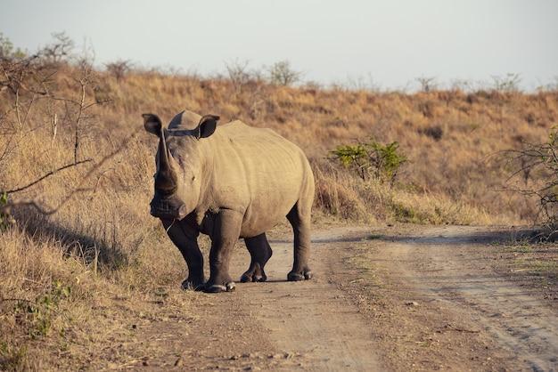 Индийский носорог в южной африке Бесплатные Фотографии