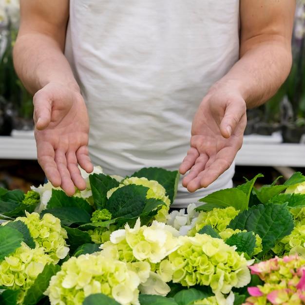 植物のコレクションを提示する個人 無料写真