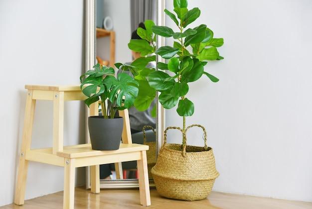 屋内熱帯観葉植物 Premium写真