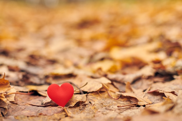 Infatuation or unrequited romantic love concept. Premium Photo