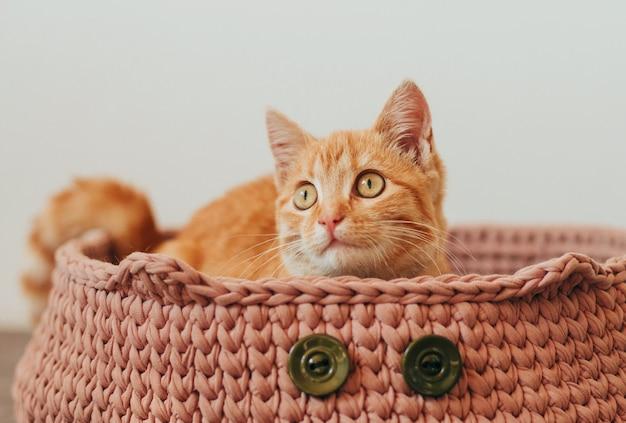 ニットピンクの猫のベッドで生ingerタビー子猫。 Premium写真