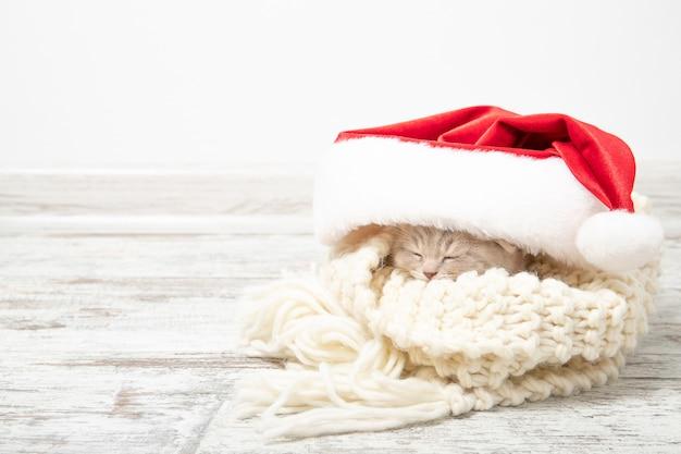 クリスマス帽子で眠る小さな生inger子猫 Premium写真