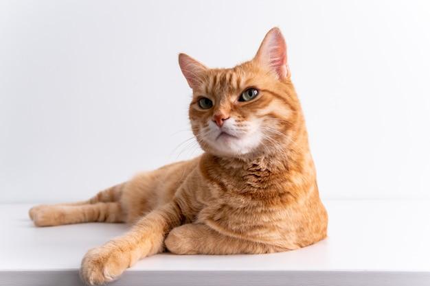 白いテーブルの上に横たわる生inger猫 Premium写真